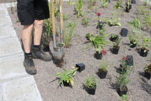 2014-07-07 Kwekerij showtuin aanleg Prairie Garden (13)