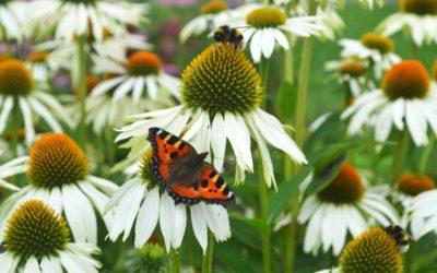 Haal ook de natuur in uw tuin!