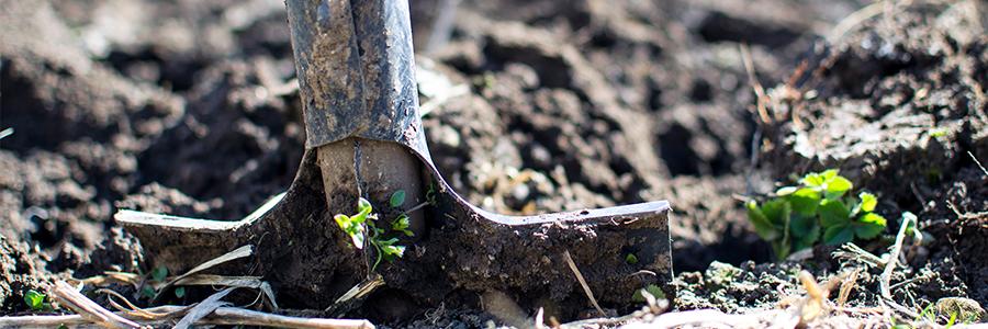 Tuin onderhoud september