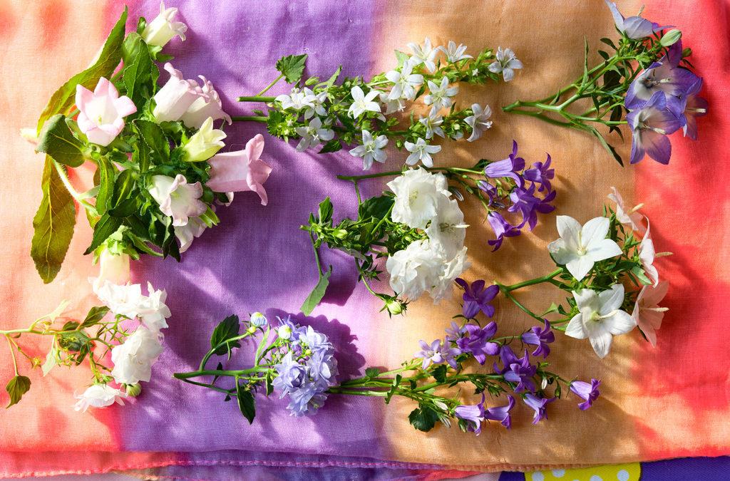 Campanula: Woonplant van de maand april 2020