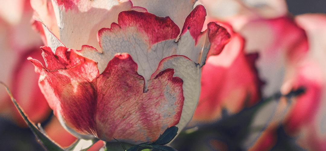 Juni: planten
